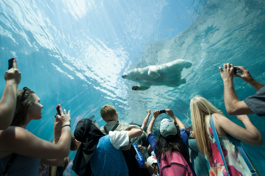 Journey to Churchill (Assiniboine Park and Zoo)