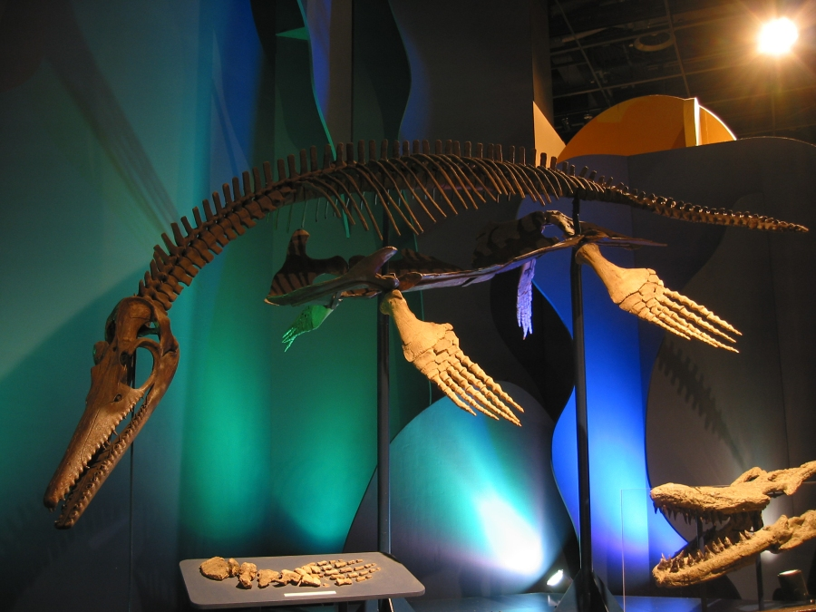Plesiosaur skeleton (Tourism Winnipeg)