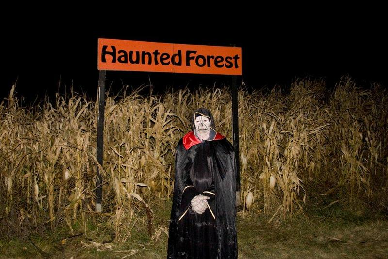 Enter the Haunted Forest at Amaze in Corn... if you dare (Amaze in Corn)